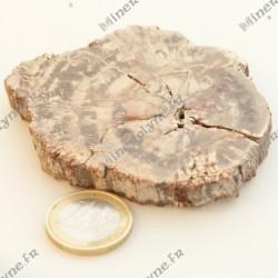 Bois fossile de Madagascar (81 g)