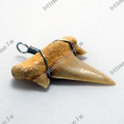 Pendentif dent Requin fossile